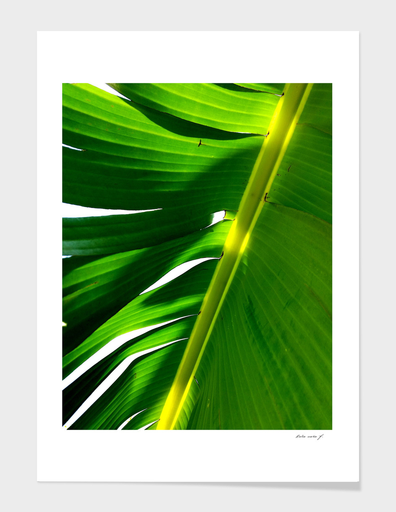 Under the Banana Tree 5
