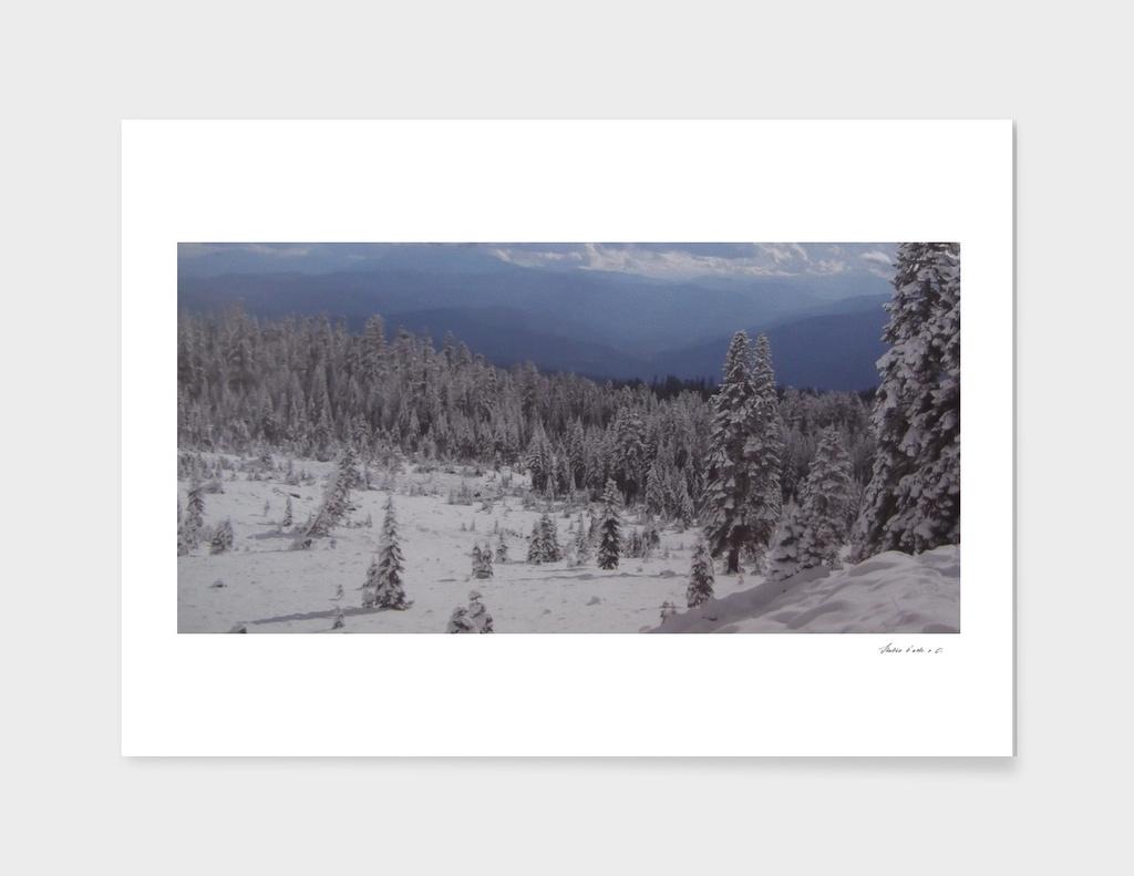 Alpine forest near Gstaad