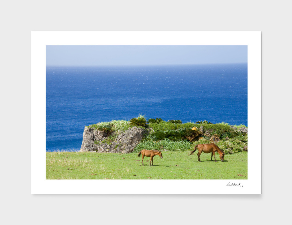 Horses by the ocean