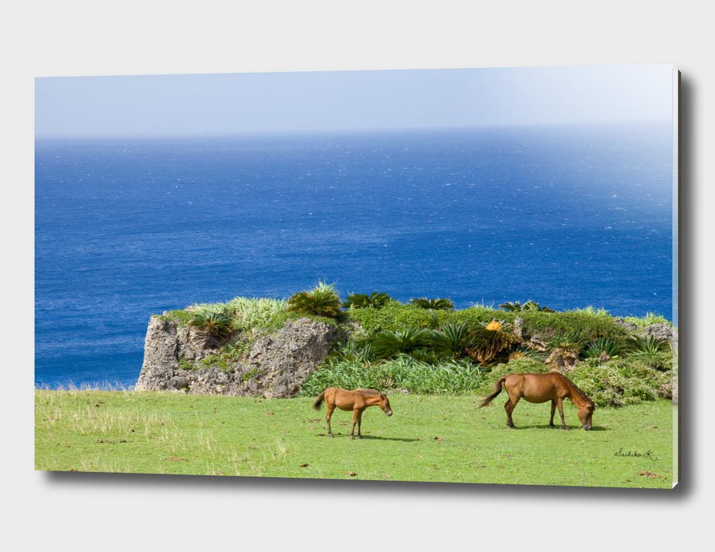 Horses by the ocean
