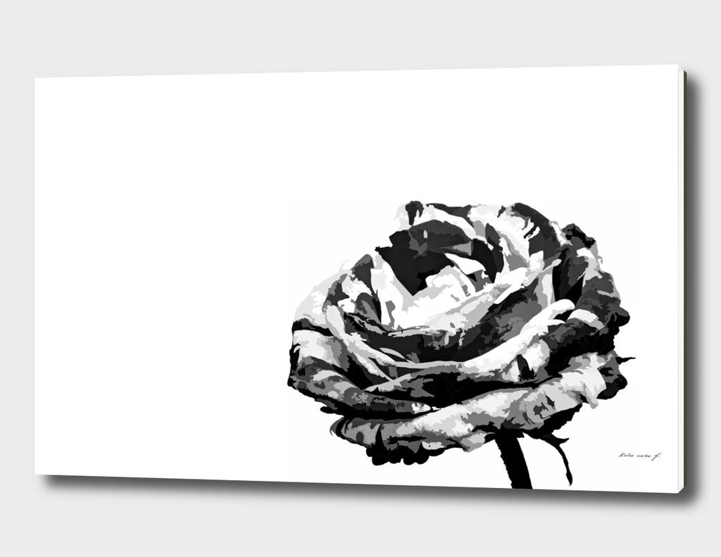 Rose 1 pb