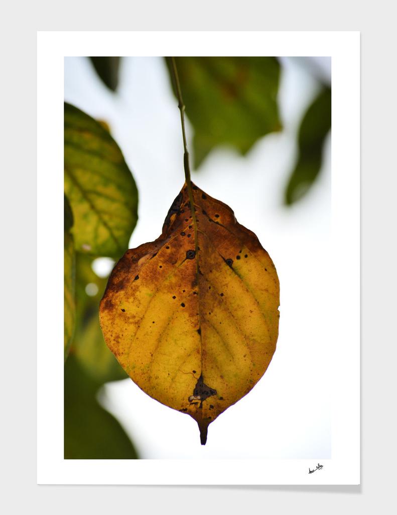 Autumn's Delight
