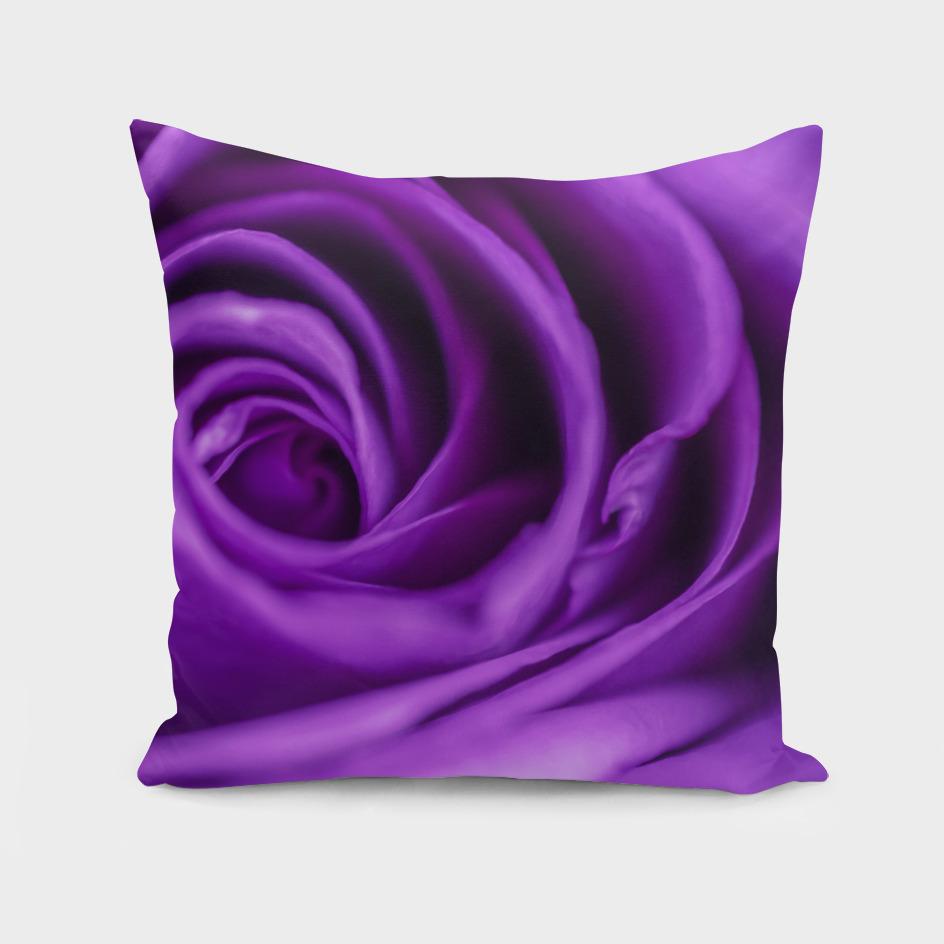 ultraviolet rose
