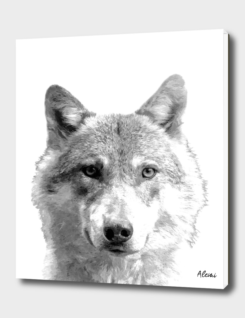 Black and White Wolf