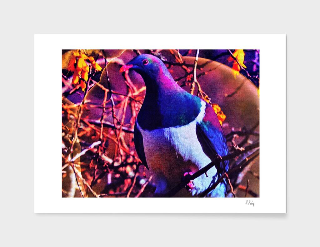 Colored Woodpigeon