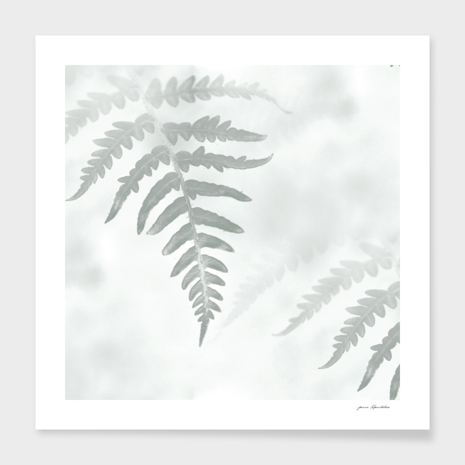 Botanical Still Life Fern