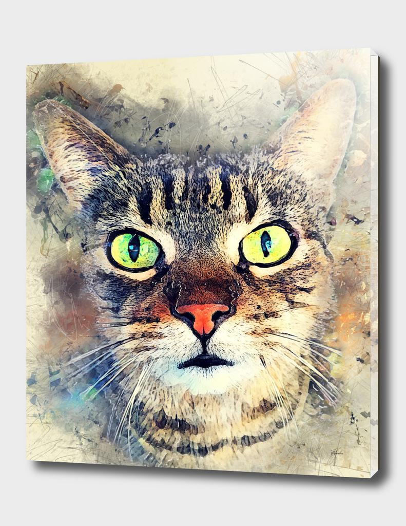 cat Baxter