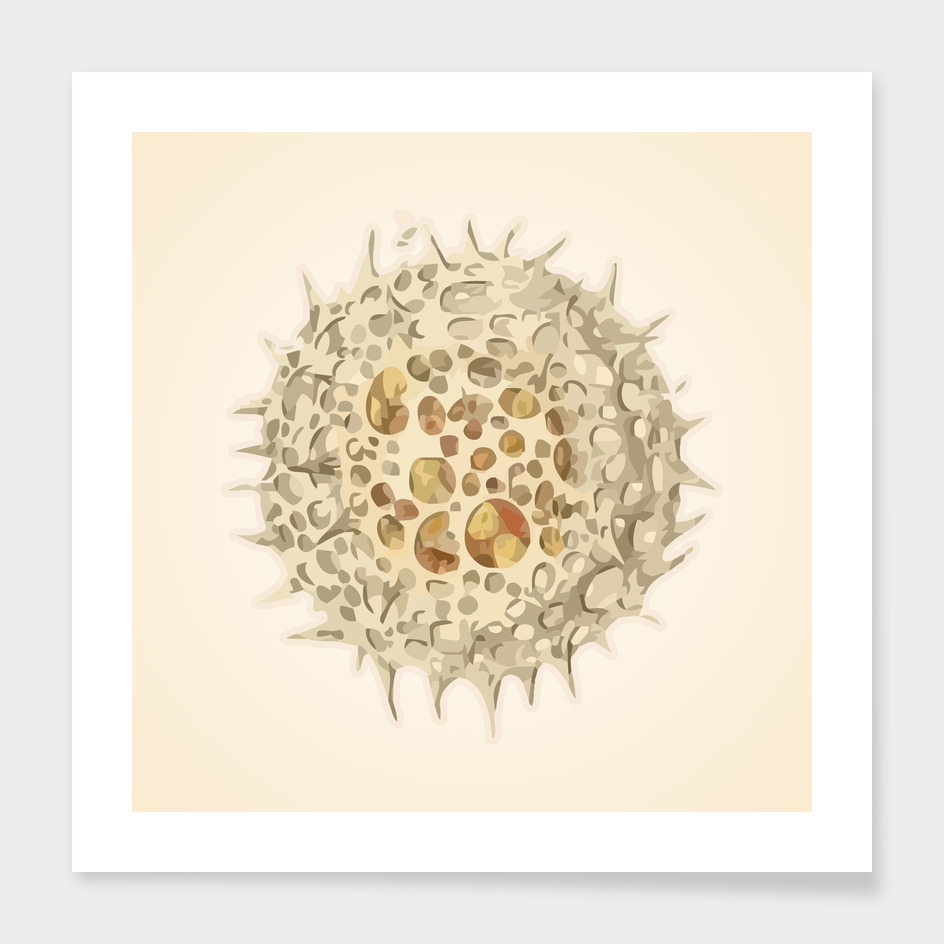Ernst Haeckel Revisited