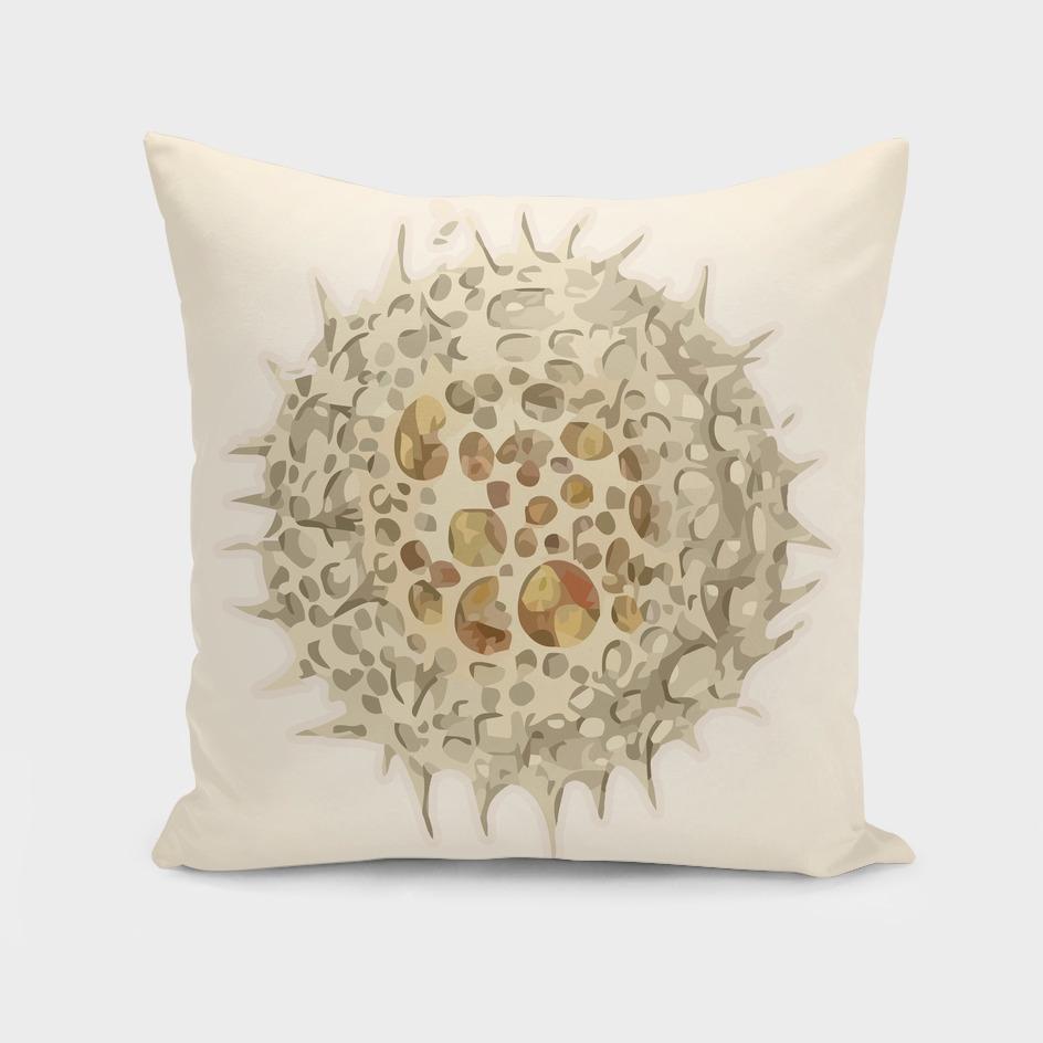 Ernst Haeckel Revisited