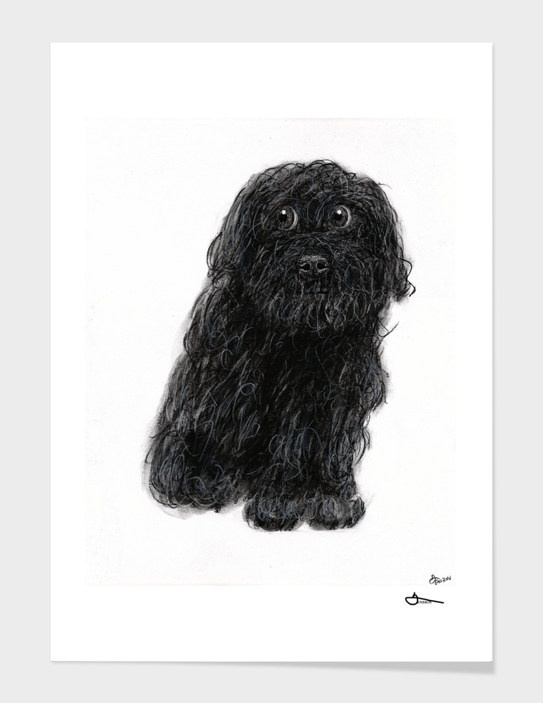 Charlie the Dog - Charcoal/Chalk Drawing