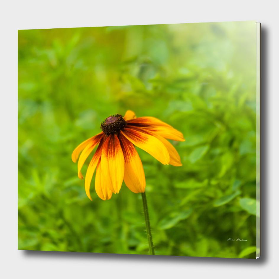 Yellow Flower Green Background