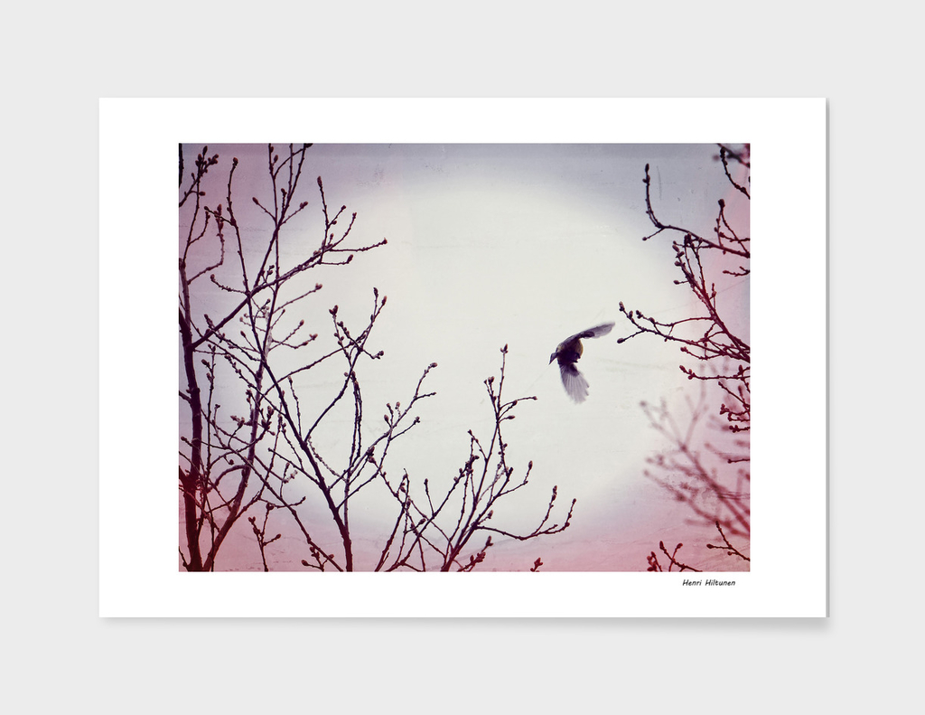Bird in the sky pink lilac white