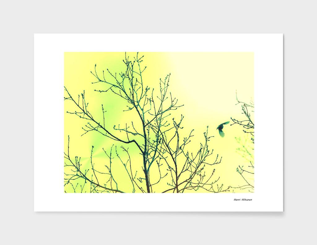 Bird in the sky yellow & green