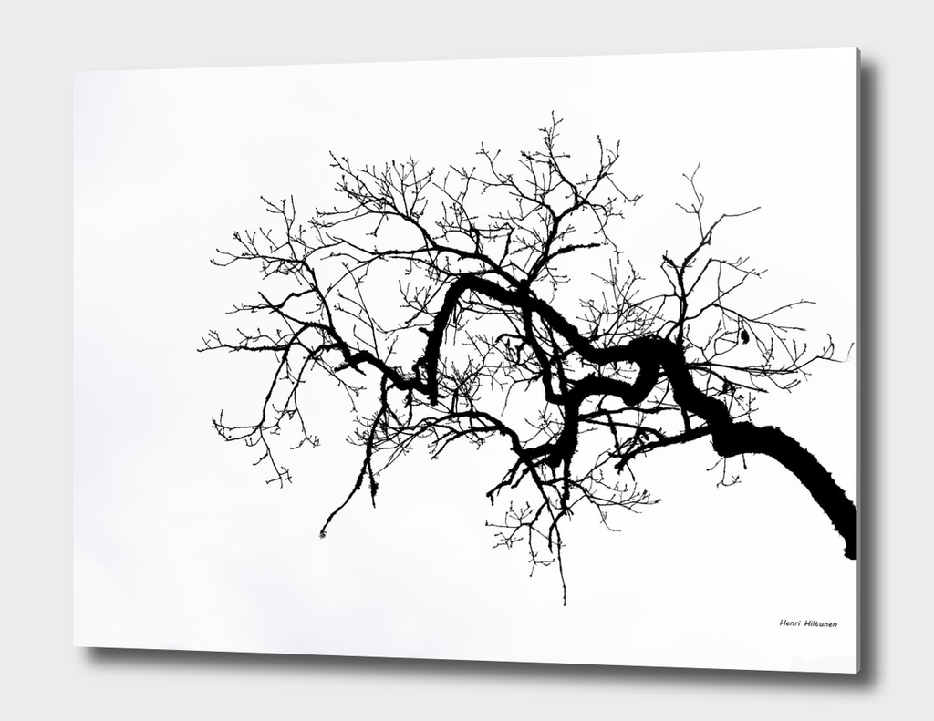 Branch black and white