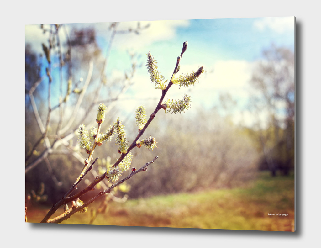 Branch with buds 1