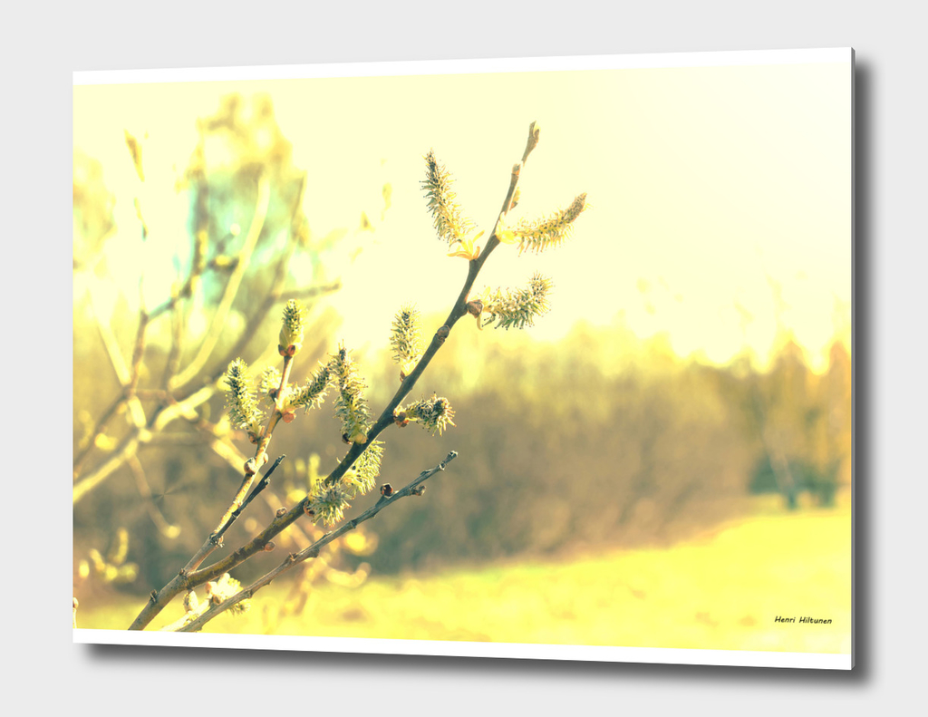Branch with buds 2