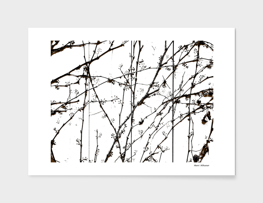 Branches 7
