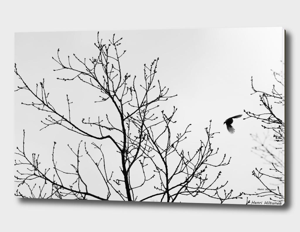 Bird in the sky Black & White