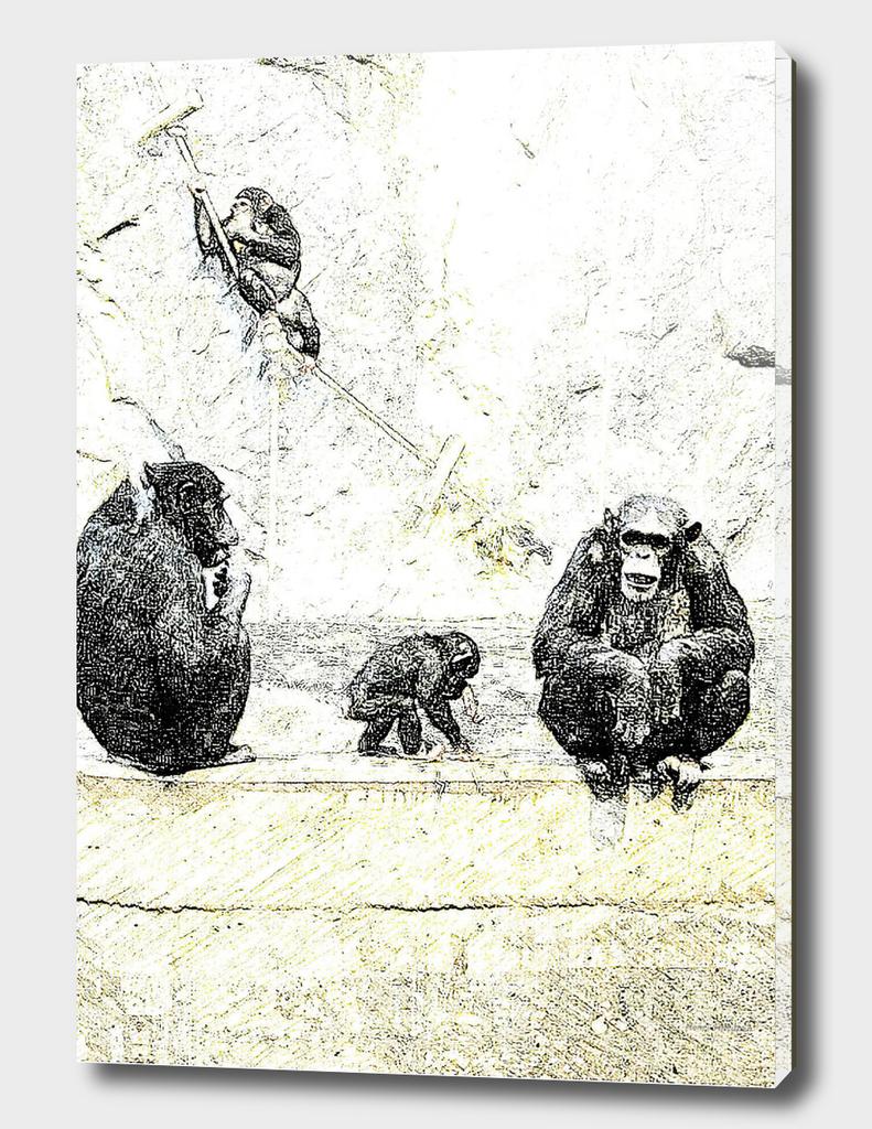 Chimpanzee 12