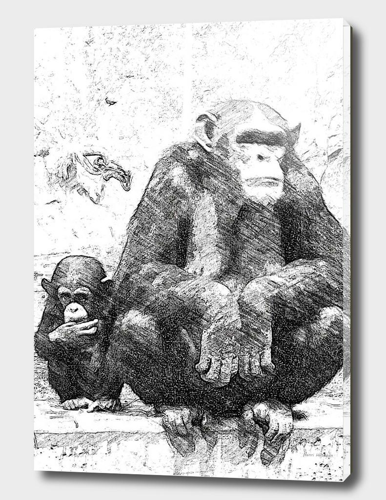 Chimpanzee 15