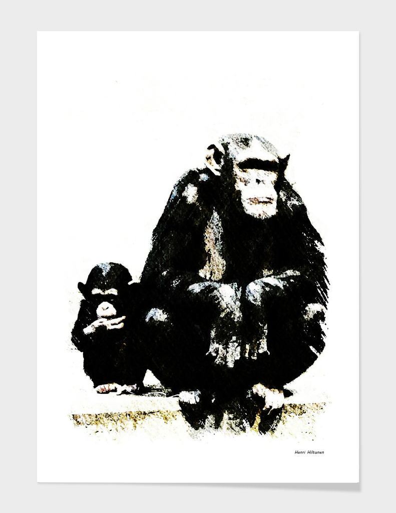 Chimpanzee  17
