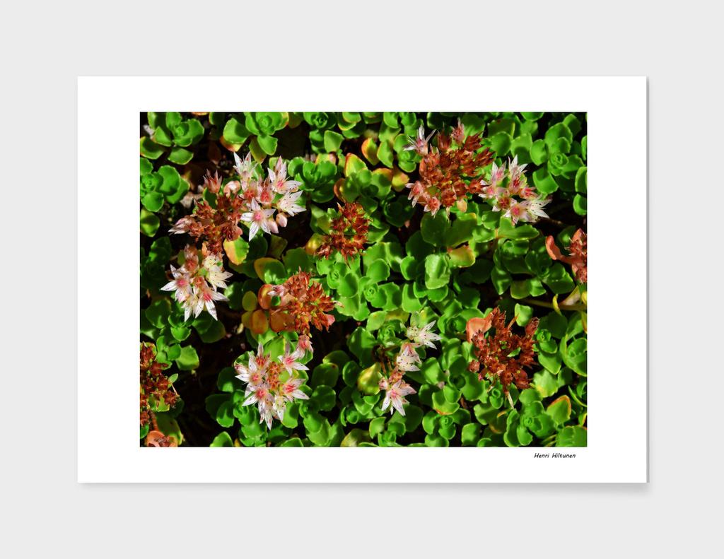 Flower carpet 1