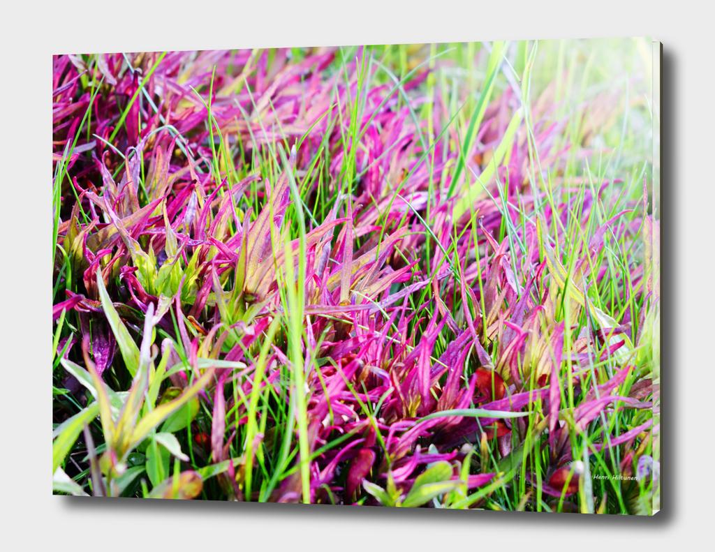 Flowery grass