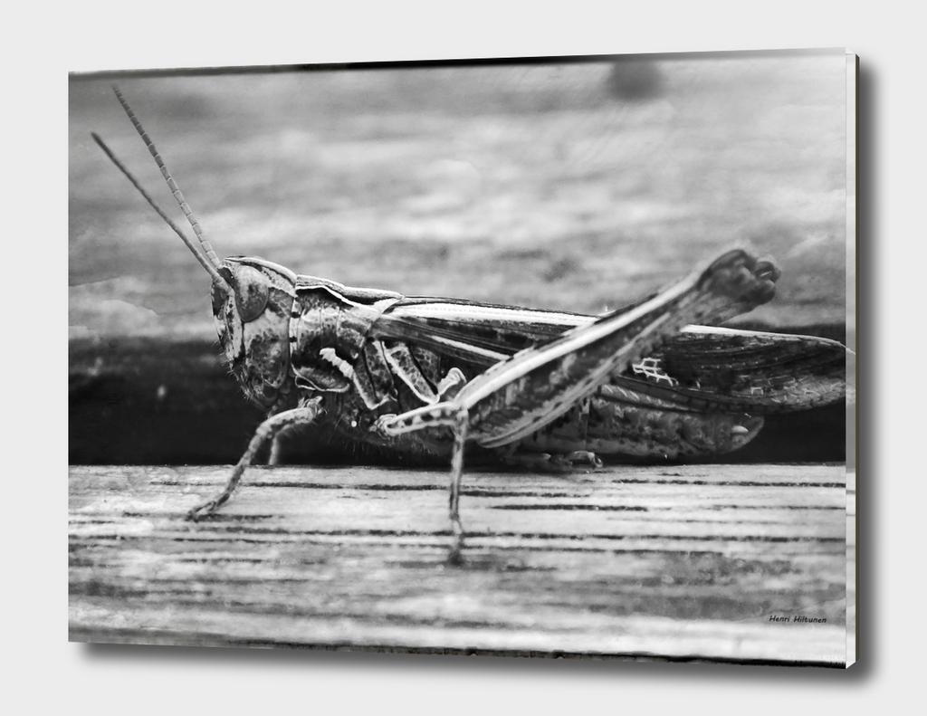 Grasshopper 4
