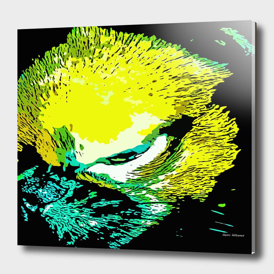 Griffon petit brabancon 3