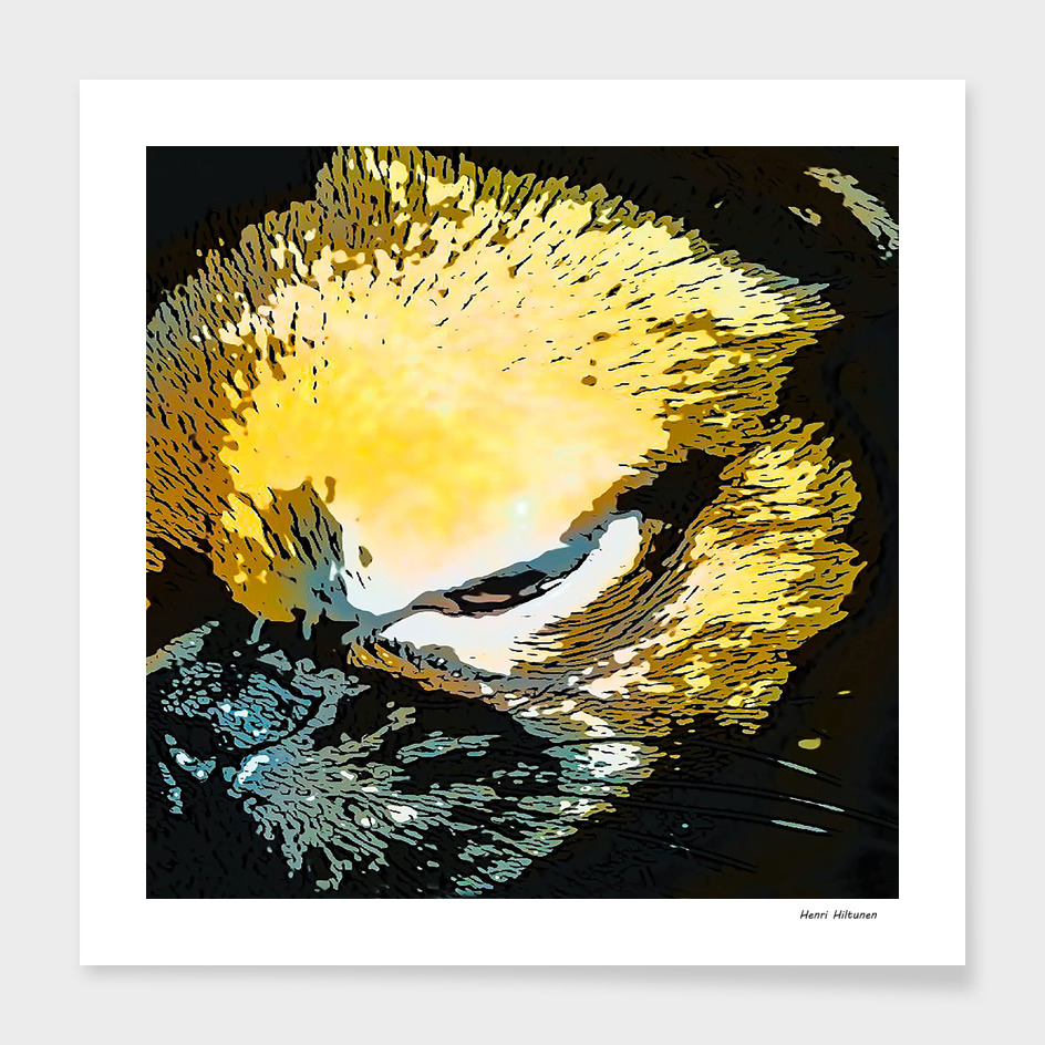 Griffon petit brabancon 4