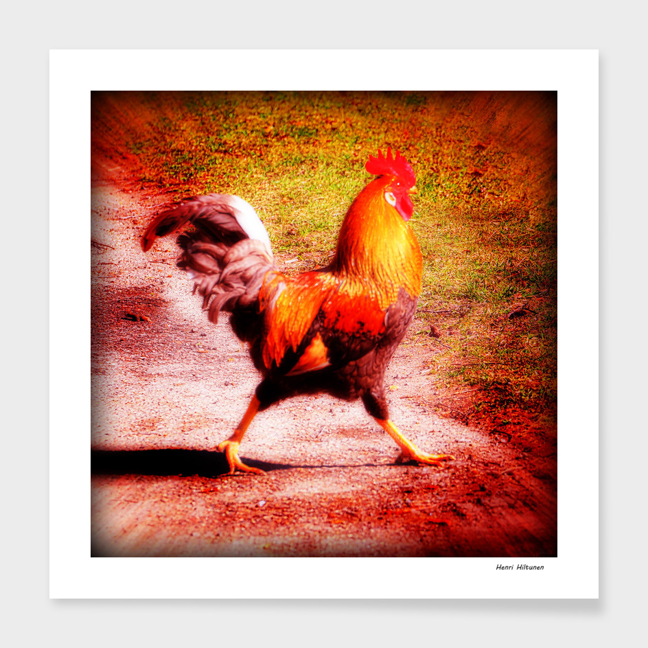 Happy Rooster 1