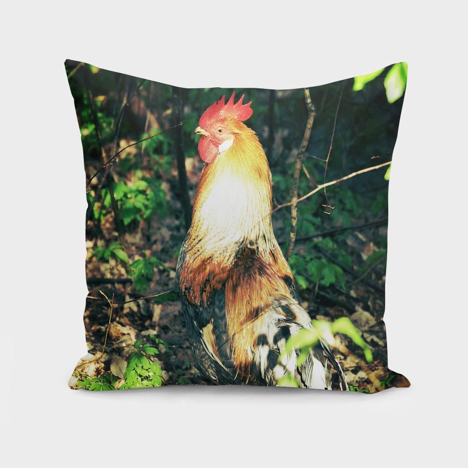 Happy Rooster 2