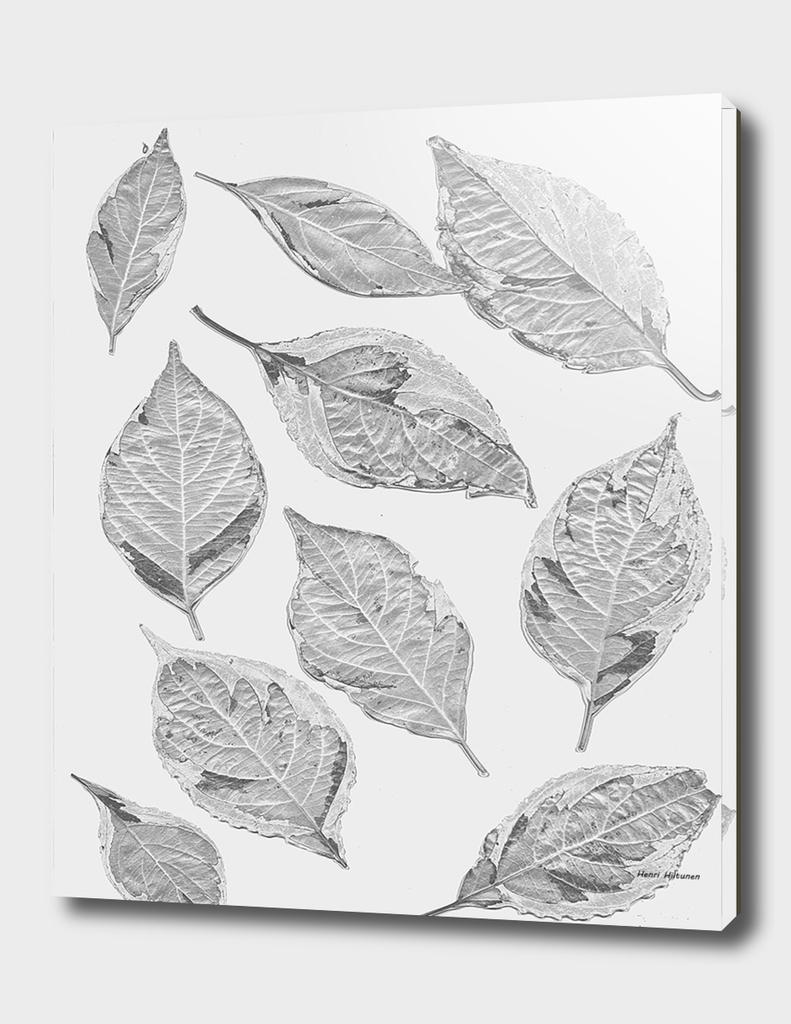 Leaves grey