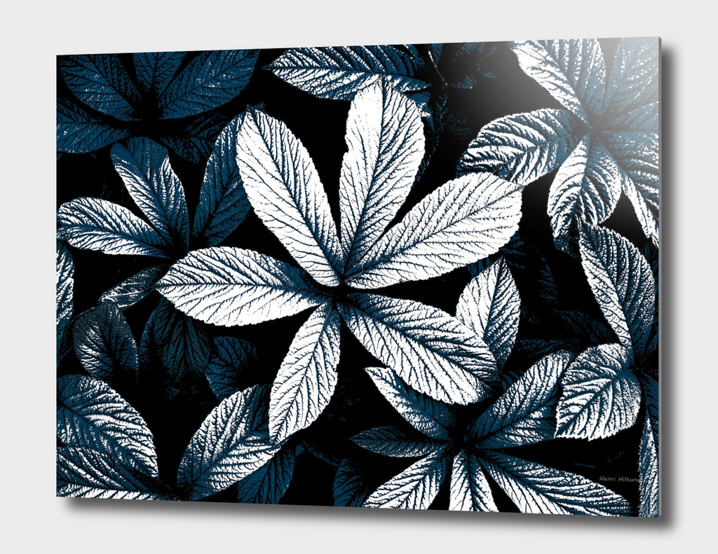 Leaves   graphic 2