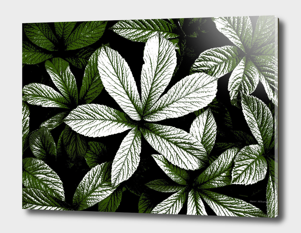 Leaves graphic 5
