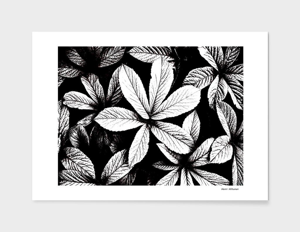 Leaves graphic 7