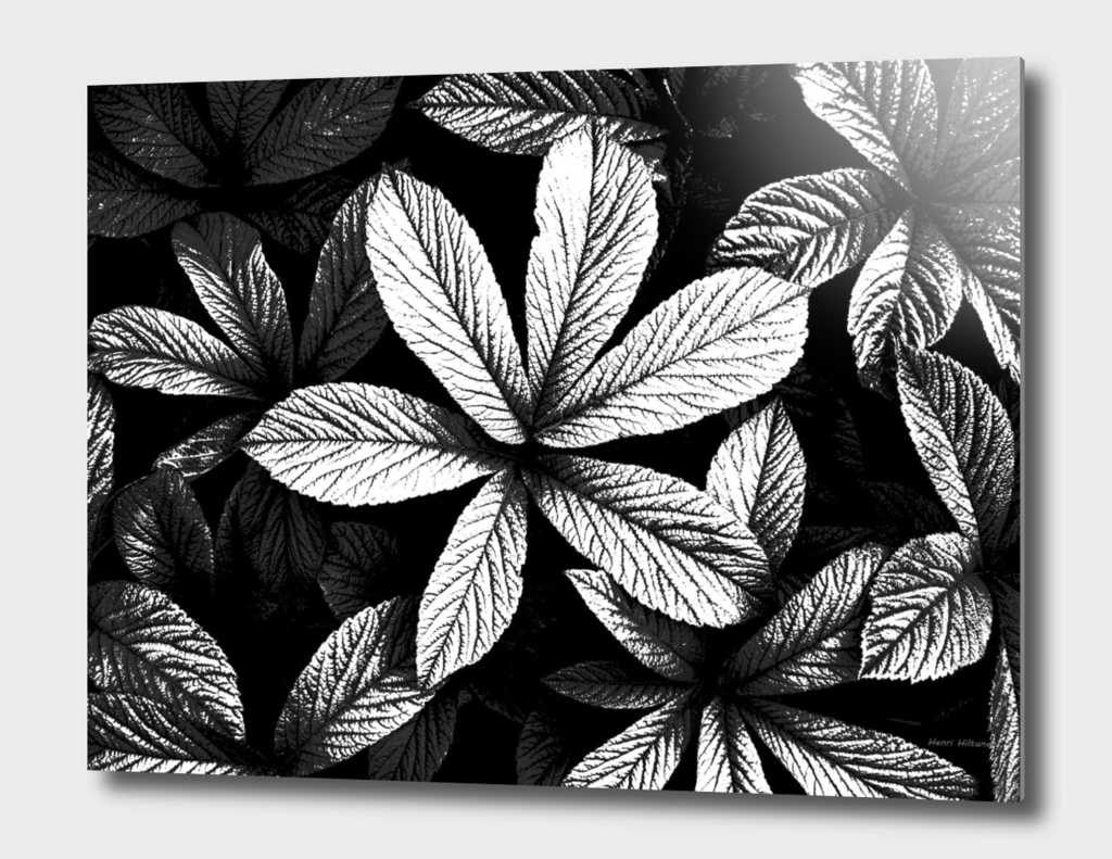 Leaves  graphic 10