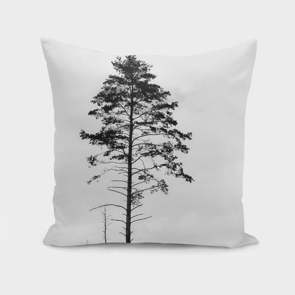 Pine tree 5