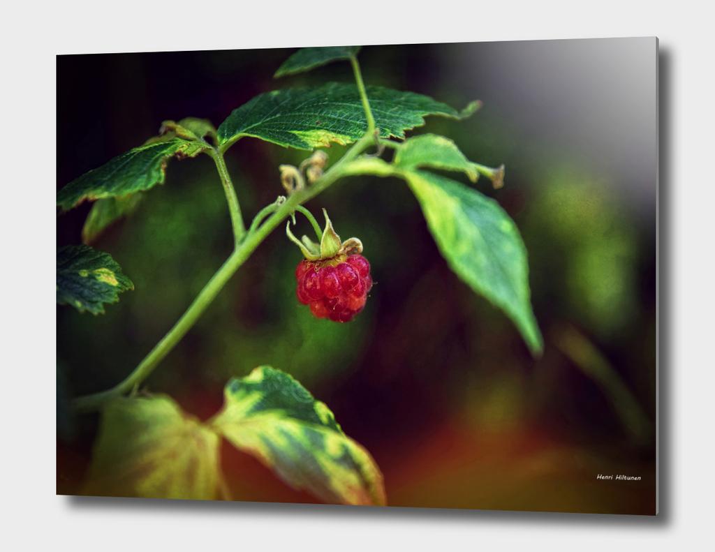 Rasberry 1