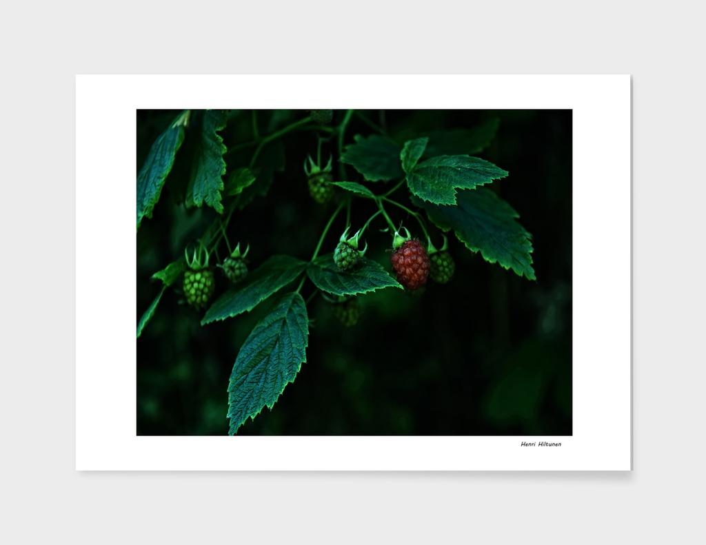 Rasberry 2