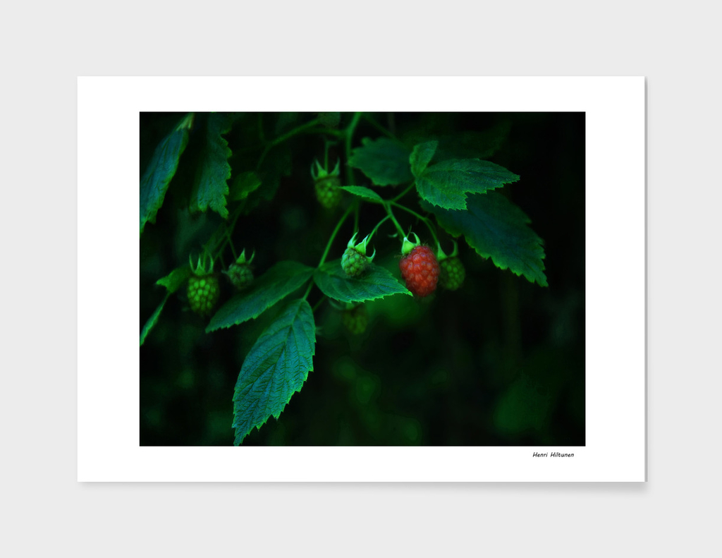 Rasberry 4