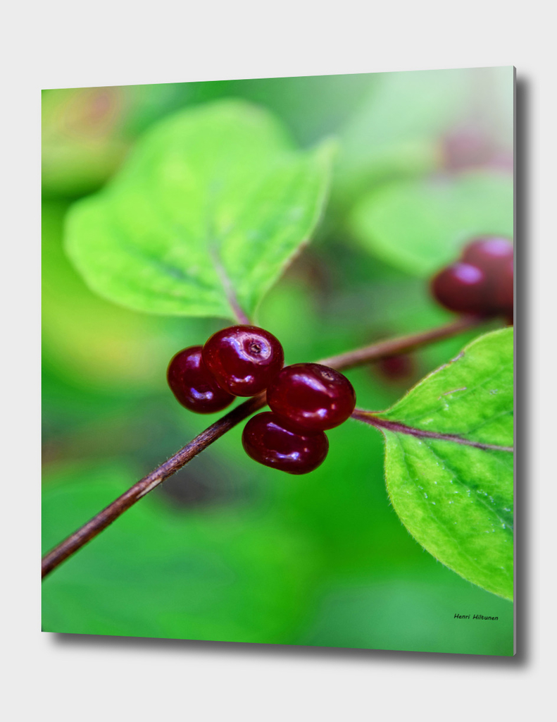 Red berrys 1