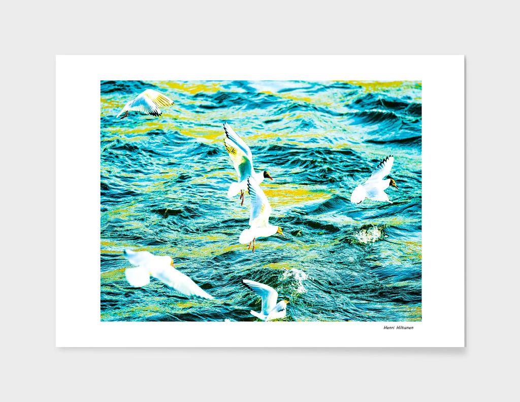 Seagull 9