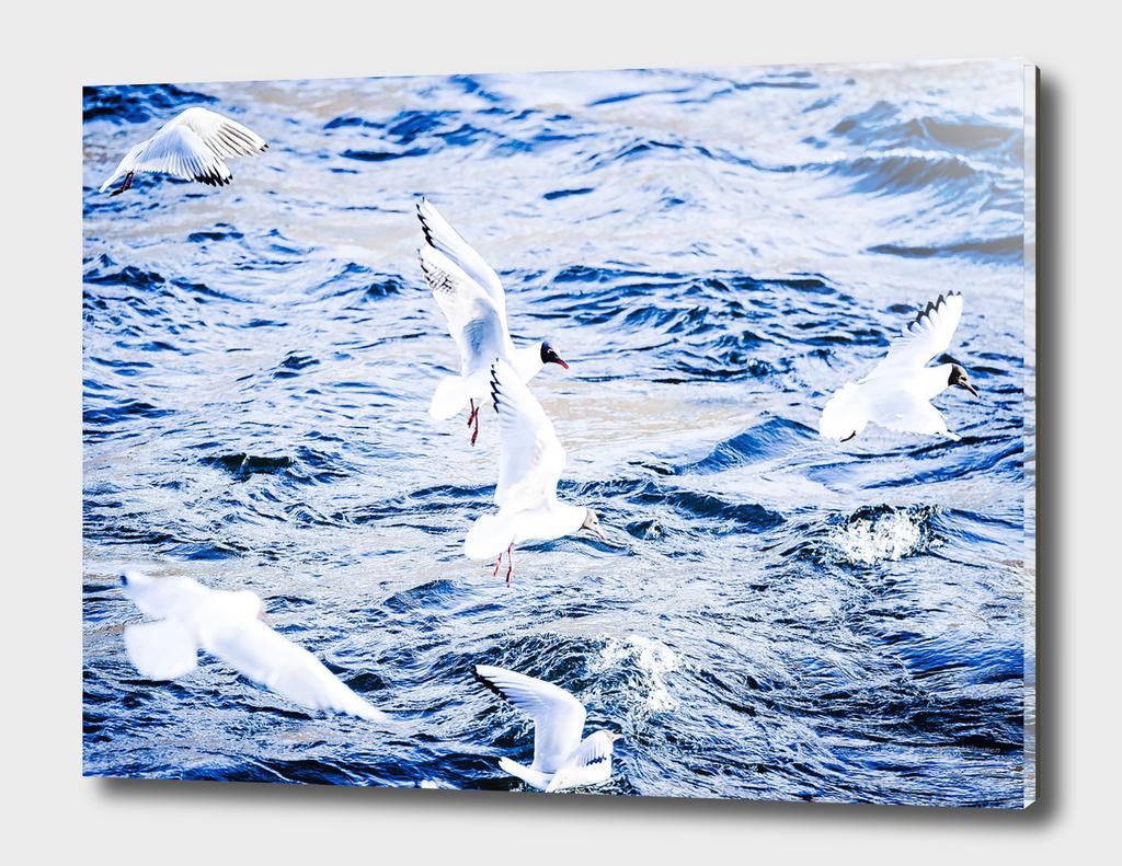 Seagull 15