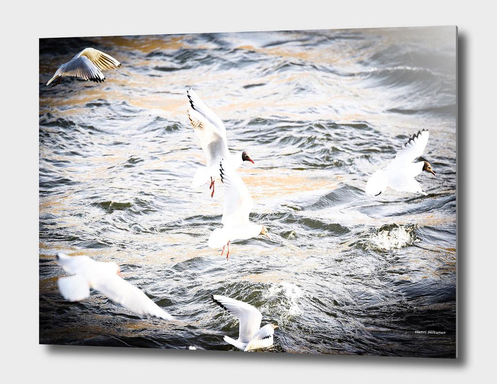 Seagull 17