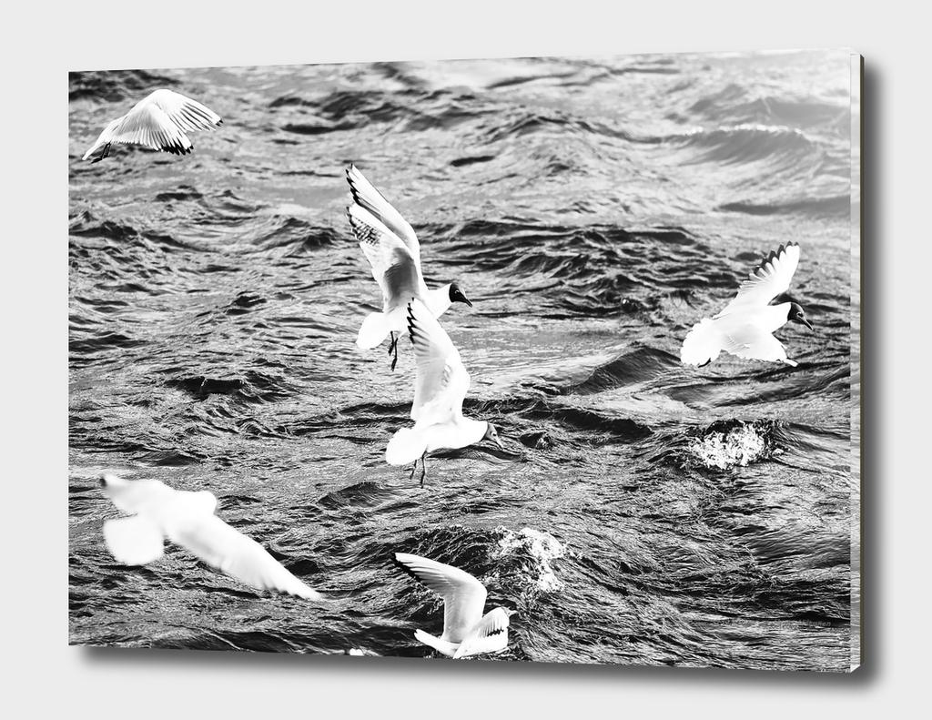 Seagull 18