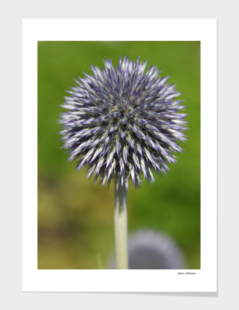 Spiked Flower 4