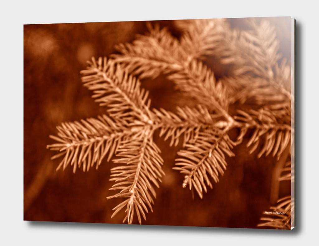 Spruce needle 1