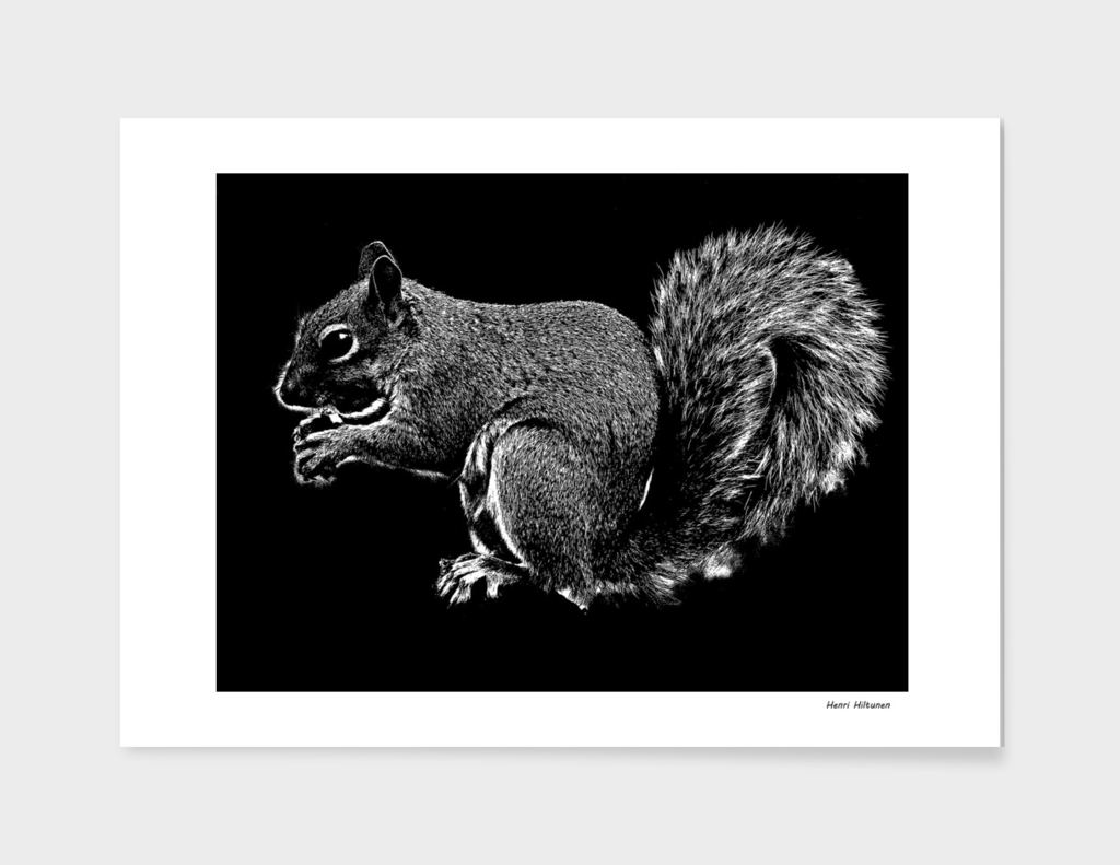 Squirrel 1