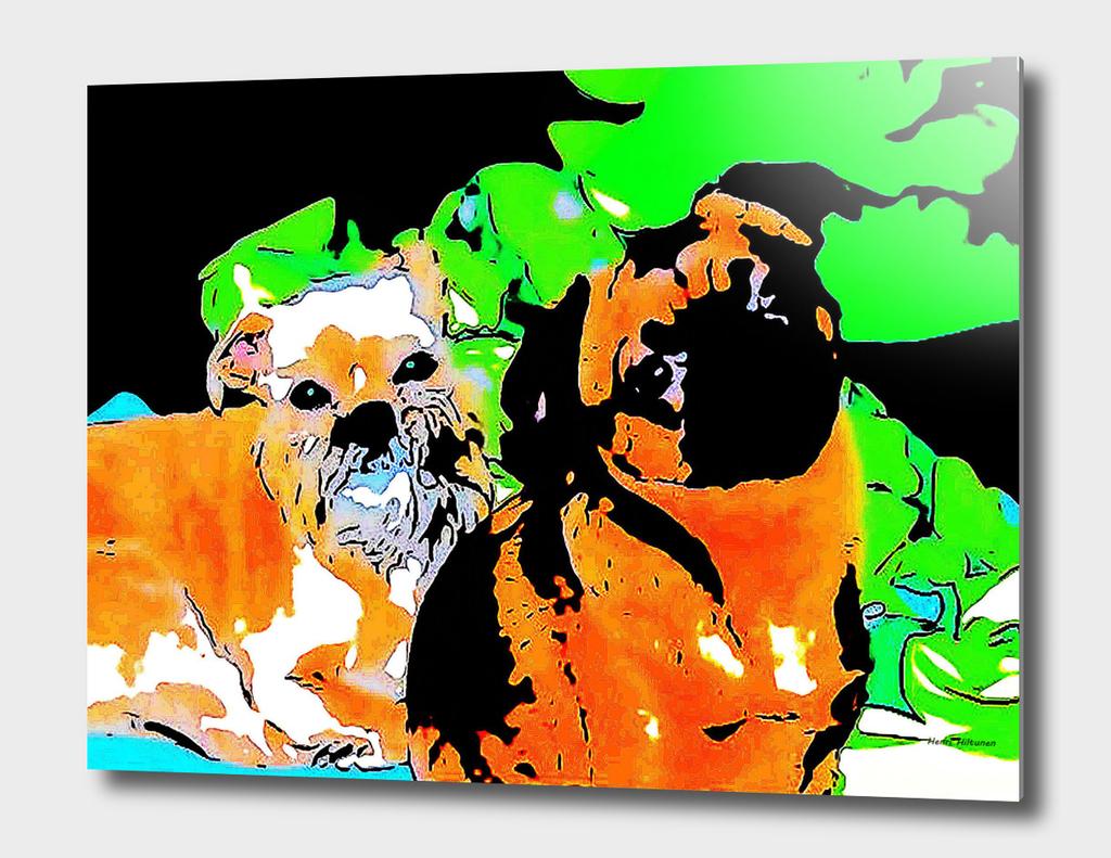 Griffon Bruxellois &  Griffon petit brabancon 5